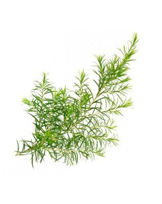 MOKOSH Olejek eteryczny 100% Drzewo herbaciane